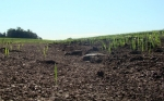 Predecir la erosión para proteger la productividad de los suelos
