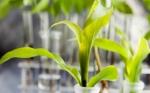 Empresarios de Santa Cruz ofrecen subir nivel de PIB a un 7% con biotecnología