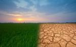 Los fertilizantes como parte de la solución al cambio climático