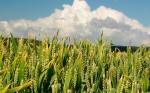 ¡Te tengo!: el gen que quita la diversión a los hongos