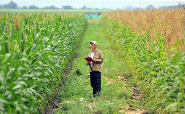 Estudio: Los cultivos genéticamente modificados son necesarios para la seguridad alimentaria