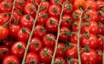 El reemplazo genético mediado por CRISPR-Cas9 genera líneas de tomate de larga duración