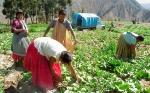 Bolivia: Lanzan Sistema de Alerta Temprana para los cultivos