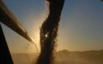 Las cosechas de maíz y de soja en Estados Unidos están cerca de finalizar