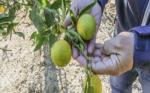 La sequía y la falta de agua amenazan 35.800 hectáreas de cultivos en la provincia de Alicante en España