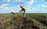 ¿Es la agricultura ecológica más respetuosa ambientalmente?