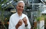Descubrimiento de genes del trigo pueden detener una epidemia mundial