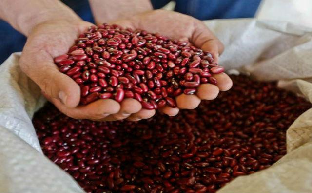 Colombia tendrá el banco de fríjol, yuca y forrajes más grande del mundo