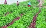Colombia: Urgen al Congreso aprobar proyecto de innovación rural