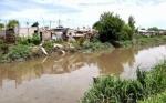 Utilizarán el residuo de la caña de azúcar para descontaminar un arroyo de La Plata