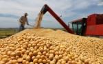 Argentina podría duplicar su productividad en granos