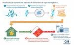 Una soya OGM es la nueva arma de la medicina en la lucha contra el SIDA