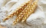 Desarrollan trigo transgénico que produce una harina nutritiva alta en hierro