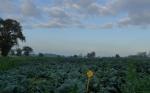 Perspectivas sobre la agricultura orgánica y nuevas técnicas de cultivo de plantas