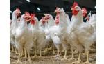 ¿Qué se prevé para el mercado mundial de proteína animal el 2018?