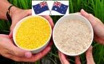Australia y Nueva Zelanda aprueban el arroz dorado para su consumo humano