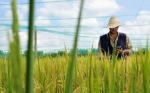 Big data y ciencia: Los aliados de los agricultores para entender el clima