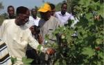 Nigeria tiene dos cultivos de OGM en camino para 2018
