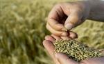 The Washington Post: Evitar los OGM no es solo anti-ciencia, es inmoral