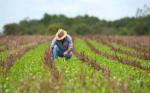 Brasil obtuvo en 2017 el segundo mayor superávit en su balanza comercial agropecuaria