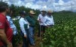 Variedades de soja paraguaya se destacan en territorio brasileño