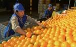 Un ingenio que apuesta fuerte a la producción de frutas y jugos