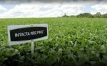 Cuestionan una patente de Monsanto en Brasil
