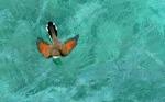 Mamíferos y aves tienen más posibilidades de adaptarse al cambio climático