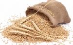 Desarrollan trigo con 10 veces más fibra: Protege contra el cáncer y diabetes