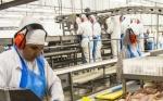 Perú fiscaliza empresas exportadoras de carne aviar de Bolivia