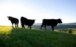Satisfacción en la industria cárnica neozelandesa por la firma del acuerdo de libre comercio del Pacífico