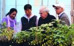 Investigadores de la Universidad Estatal de Kansas logran avances sobre la resistencia al Glifosato en plantas del género Amaranto