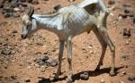 Una nueva sequía en Somalia podría poner en riesgo la seguridad alimentaria