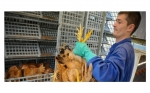 Bolivia implementa un sistema moderno de control en el área avícola