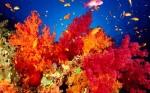 Conoce los arrecifes que están sobreviviendo al cambio climático