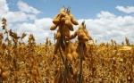 Es oficial: las pérdidas por la sequía en Argentina alcanzan el 23 % de la cosecha de soja y al 18 % del maíz