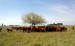 EE.UU. verificó la región Patagonia Norte A con vistas a apertura mercado de carne bovina argentina