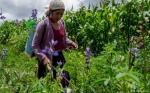 Más cerca del sol: mujeres bolivianas fuertes se adaptan al cambio climático