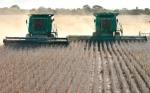 Bolivia: Buen momento para invertir en el agro; los precios se recuperan