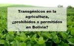 Transgénicos en la agricultura, ¿prohibidos o permitidos en Bolivia?