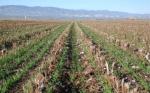 Freno al cambio climático mediante el modelo de agricultura de conservación