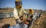 Las abejas, acorraladas por el cambio climático
