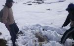 Dos municipios paceños reportan animales muertos y cultivos destruidos por la nevada