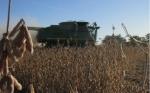 Por las sequías, Paraguay exportará más soja que Argentina