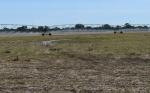 Bolivia duplica a 469.000 las hectáreas de cultivo bajo riego en 12 años