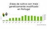La superficie cultivada de maíz Bt en Portugal aumentó un 3,6 % el 2017