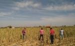 España : El seguro agrario como única herramienta contra las adversidades