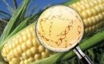 Cómo la biotecnología vegetal puede brindarnos mejores alimentos y medicinas
