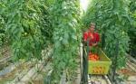 IICA y FIDA contribuirán a que agricultores familiares de las Américas sean más resilientes al cambio climático