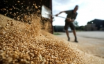Las plantas modificadas con CRISPR ahora están sujetas a las duras leyes de GM en la Unión Europea